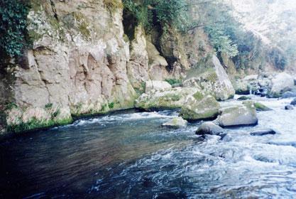 大野川水系稲葉川のポイント