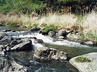 玉来川、入渓してすぐの景色