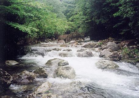増水気味の北川