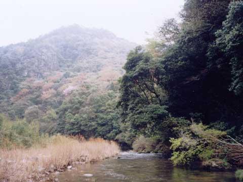大分川支流七瀬川の風景