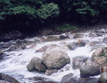 増水した北川の流れ