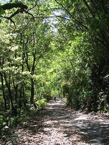 番匠川の林道