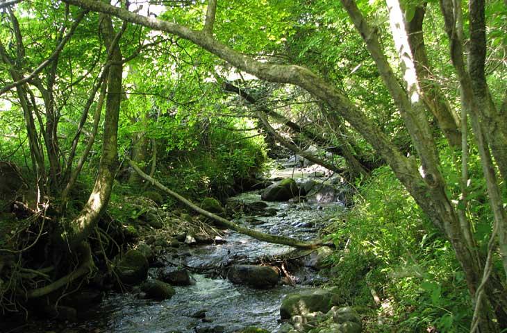 稲葉川水系の源流部