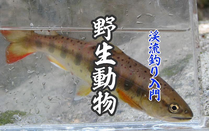 渓流釣り入門 野生動物の危険