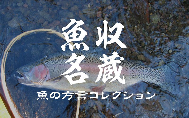 魚名収蔵 地方名・方言名は彩り豊か