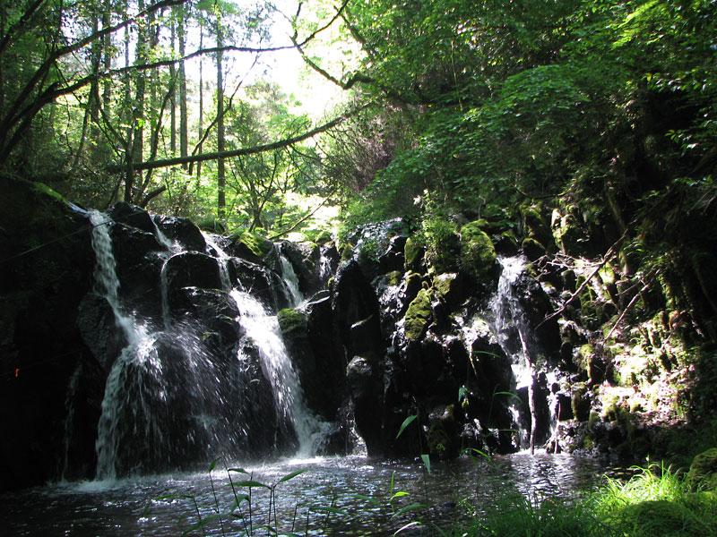榎葉魚の棲む小渓流の滝