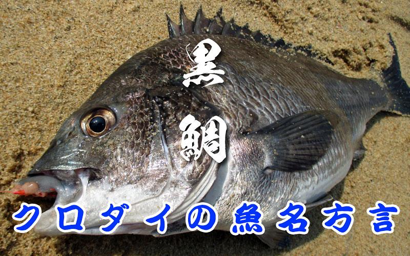 黒鯛の方言名