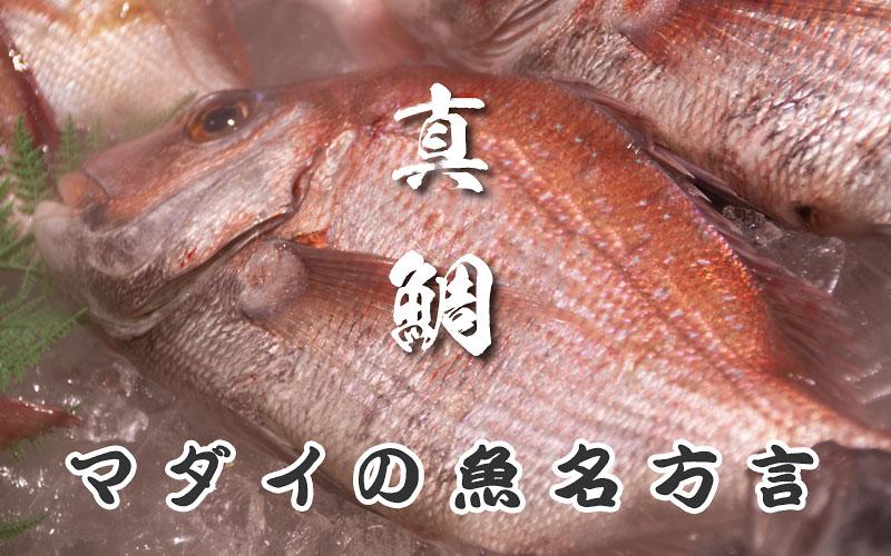 真鯛の魚名方言
