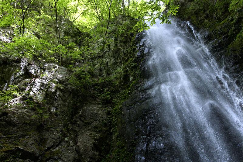 新緑と滝のコントラスト