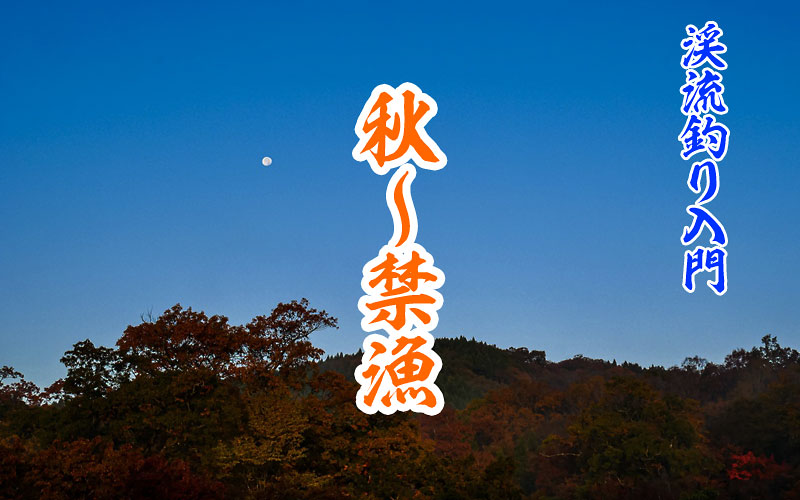 秋の渓流から空を見る