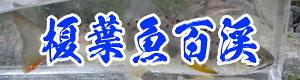 エノハ百渓