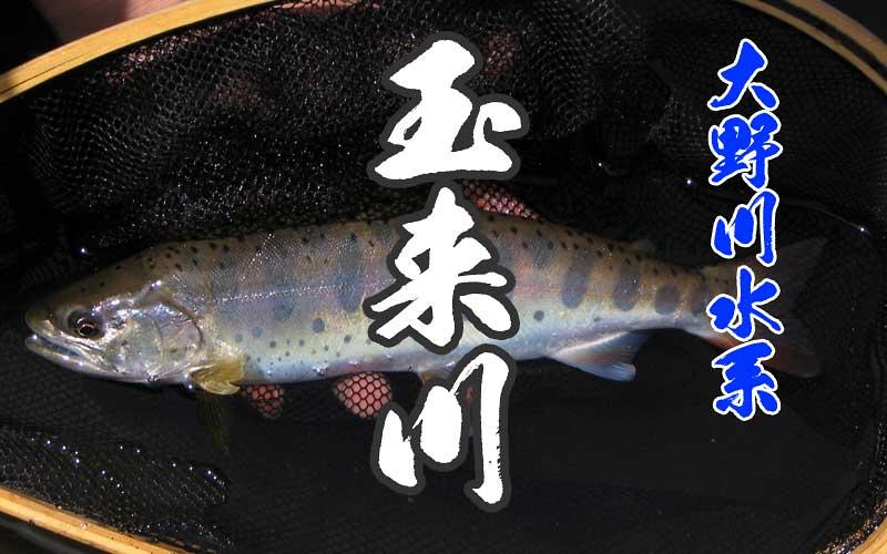 玉来川の渓流釣り