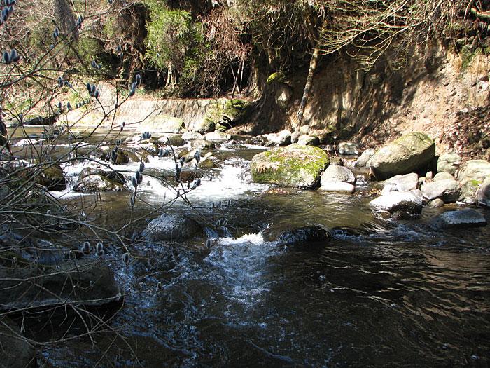 小渓を遡行する